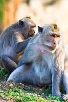 Bali, Indonesia, monkeys run in the Uluwatu temple Fine-Art Print
