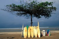 Surfboards Lean Against Lone Tree on Beach in Kuta, Bali, Indonesia Fine-Art Print