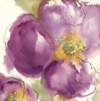 Radiant Poppy II Fine-Art Print