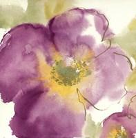 Radiant Poppy I Fine-Art Print