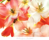 Tulips 2 Fine-Art Print