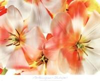 Tulips 1 Fine-Art Print
