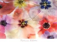 Nature's Palette Fine-Art Print