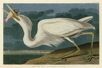 Great White Heron Fine-Art Print