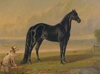 America's Renowned Stallions, c. 1876 I Fine-Art Print