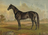 America's Renowned Stallions, c. 1876 II Fine-Art Print