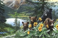 Basking in the Balsams Fine-Art Print