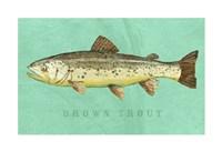 Brown Trout Fine-Art Print