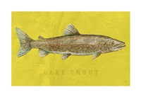 Lake Trout Fine-Art Print