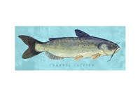 Channel Catfish Fine-Art Print