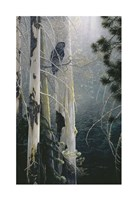 Silent Sentinel (Owl) Fine-Art Print