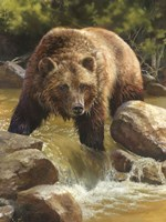Grizzly at Roaring Creek Fine-Art Print