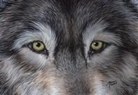 Eyes of the Wolf Fine-Art Print