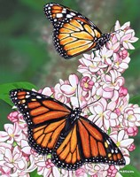 Monarch Butterfly Fine-Art Print