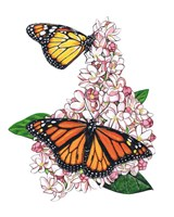 Monarch Butterfly-II Fine-Art Print