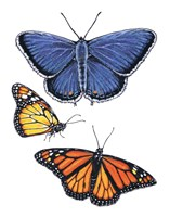 Eastern Blue & Monarch Butterfly Fine-Art Print