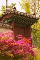 Azaleas, The Deoksugung Palace Complex, Seoul, South Korea Fine-Art Print