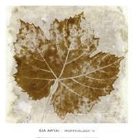 Morphology IV Fine-Art Print