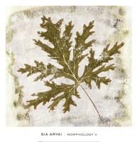 Morphology V Fine-Art Print