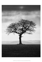 Without Leaves Fine-Art Print