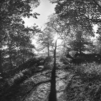 Woodland Tones I Fine-Art Print