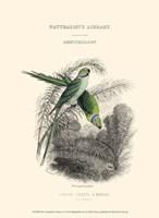 The Naturalist's Library I Fine-Art Print