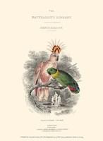 The Naturalist's Library II Fine-Art Print
