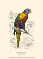 The Naturalist's Library III Fine-Art Print