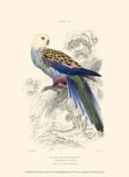 The Naturalist's Library IV Fine-Art Print