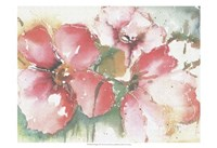 Soft Poppies II Fine-Art Print