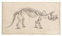 Dinosaur Study II Fine-Art Print