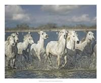 White Horses of the Camargue Fine-Art Print