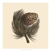 Pignon Pine Fine-Art Print