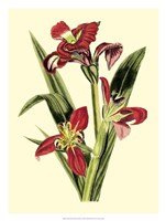 Royal Botanical Study II Fine-Art Print