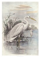 Oversize White Heron Fine-Art Print