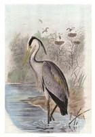 Oversize Common Heron Fine-Art Print
