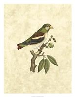 Selby Birds V Fine-Art Print