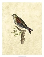 Selby Birds VI Fine-Art Print