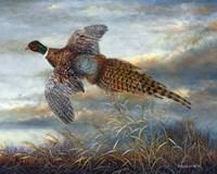 Taking Flight Fine-Art Print