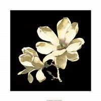 Midnight Magnolias I Fine-Art Print
