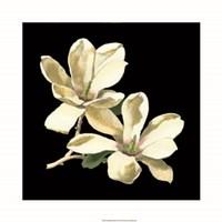 Midnight Magnolias II Fine-Art Print