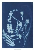 Cyanotype No.16 Fine-Art Print
