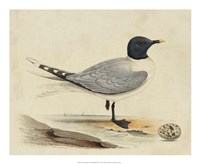 Meyer Shorebirds I Fine-Art Print