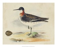 Meyer Shorebirds II Fine-Art Print