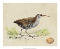 Meyer Shorebirds III Fine-Art Print