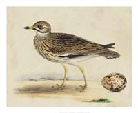 Meyer Shorebirds IV Fine-Art Print