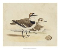 Meyer Shorebirds V Fine-Art Print