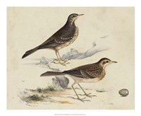 Meyer Shorebirds VI Fine-Art Print