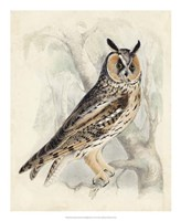 Meyer Long-Eared Owl Fine-Art Print