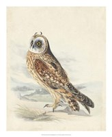 Meyer Hawk Owl Fine-Art Print